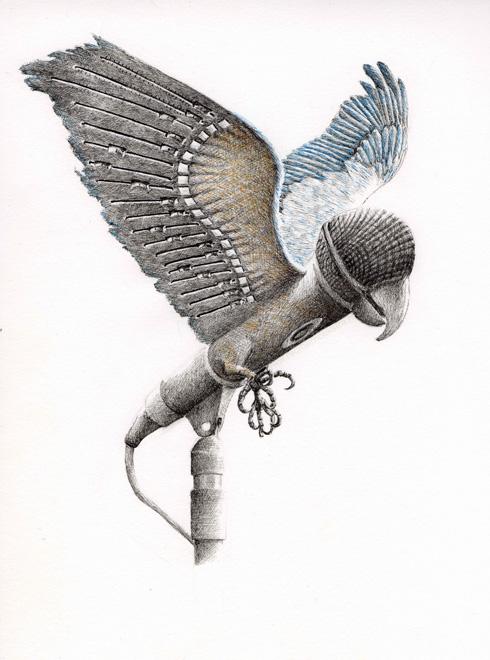 redmer hoekstra 2009 39 papegaai muziek