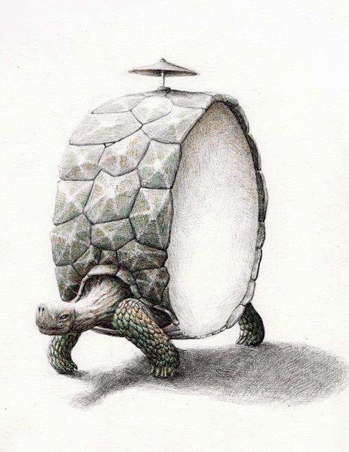 redmer hoekstra 2009 41 schildpad trommel