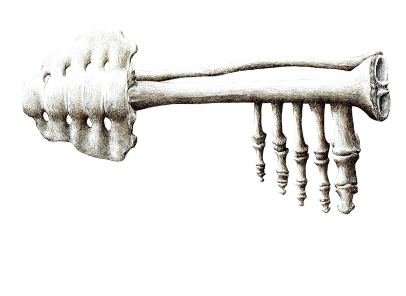 redmer hoekstra 2009 54 sleutelbeen