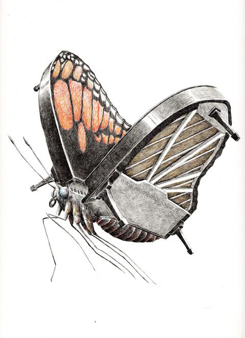 redmer hoekstra 2010 19 vlinder vleugel