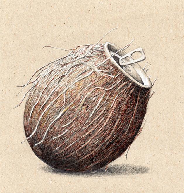 redmer hoekstra 2013 2 kokosnoot