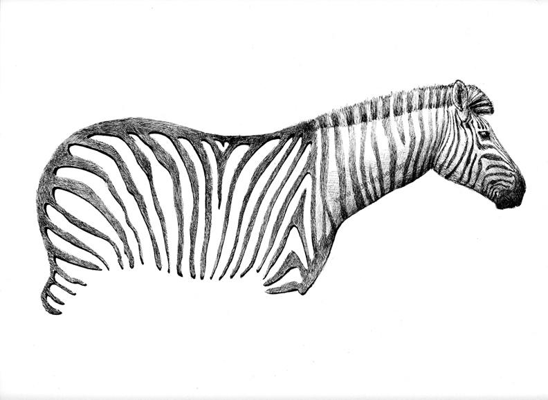 redmer hoekstra 2013 23 zebra