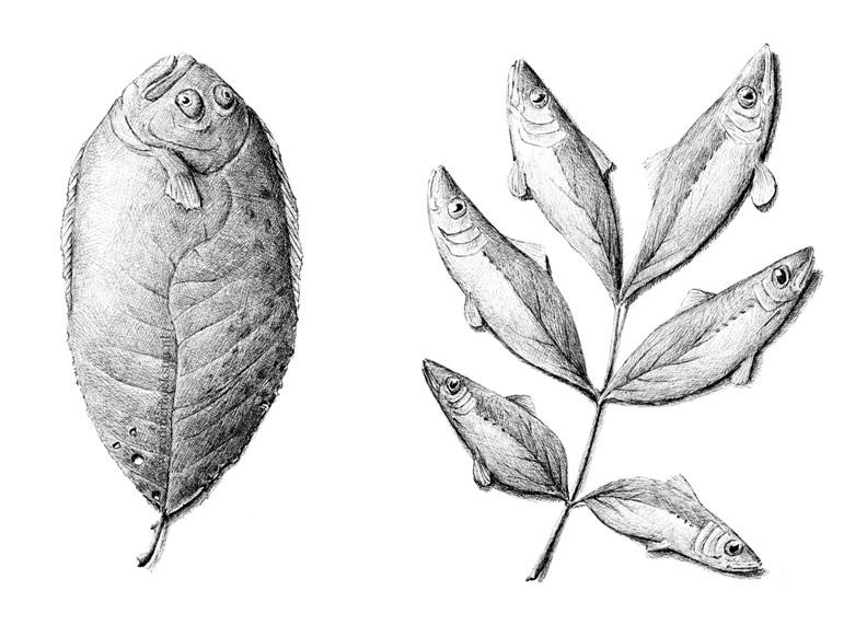 redmer hoekstra 2014 20 vis blad