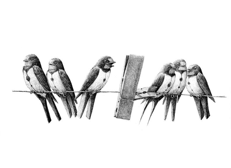 redmer hoekstra 2014 21 zwaluw knijper