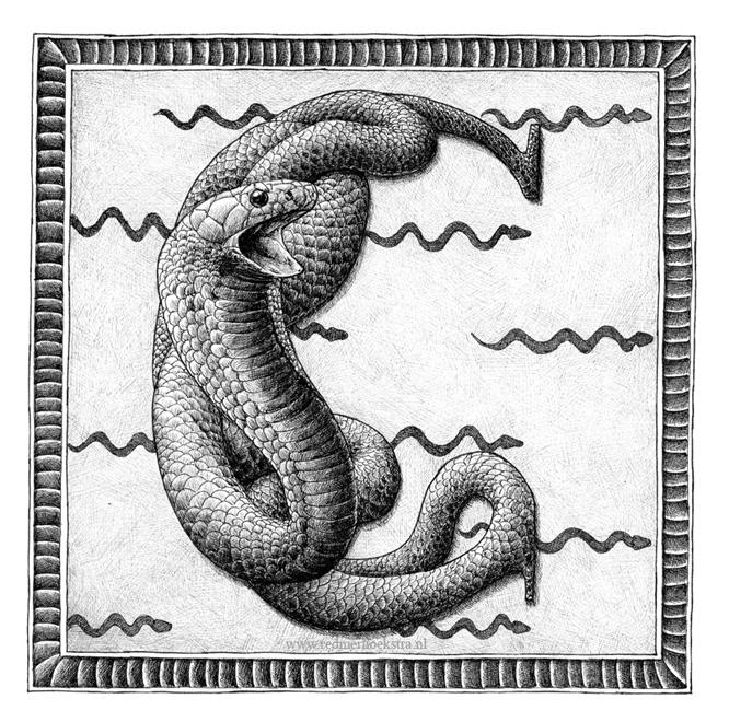 redmer hoekstra 2015 17 cobra