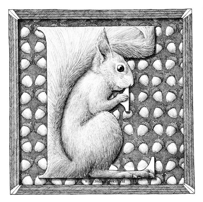 redmer hoekstra 2015 18 eekhoorn