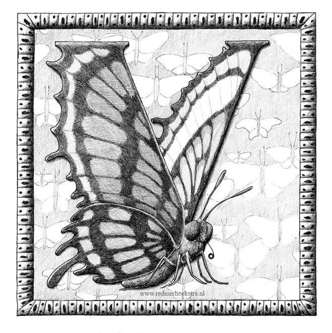 redmer hoekstra 2015 19 vlinder