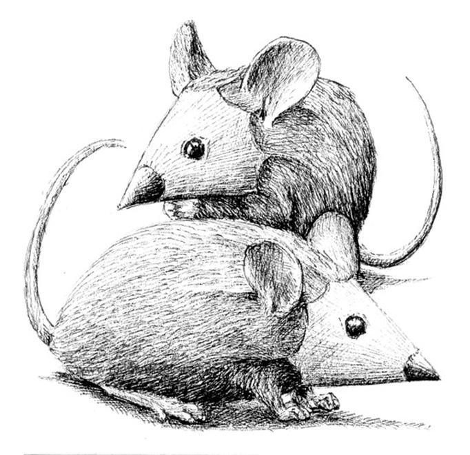 redmer hoekstra 2015 22 muizen