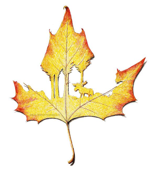 redmer hoekstra 2016 13 herfstblad