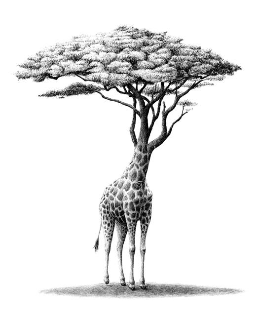 redmer hoekstra 2016 8 giraf boom